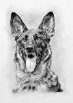 kresba_portret_pes-bambi