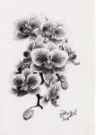 kresba_tuzka-orchidej
