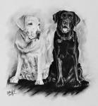kresba-portret-psi-labrador-retriever-31012017