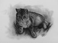 kresbanaprani-portret-kote-kocka-nazakazku-art-realisticka-RadekZdrazil-20181212