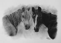 kresbanaprani-kresleny-portret-kone-nazakazku-kresba-kresleni-art-realisticka-tuzka-uhel-A3-RadekZdrazil-20200818