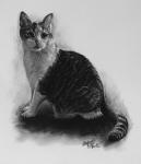 kresbanaprani-portret-obraz-kocka-nazakazku-kresba-kresleni-art-realisticka-tuzka-uhel-A4-RadekZdrazil-20200316a