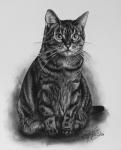 kresbanaprani-portret-obraz-kocka-nazakazku-kresba-kresleni-art-realisticka-tuzka-uhel-A4-RadekZdrazil-20200316b