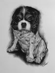 kresbanaprani-portret-obraz-pes-nazakazku-kresba-kresleni-art-realisticka-tuzka-uhel-A4-RadekZdrazil-20200303