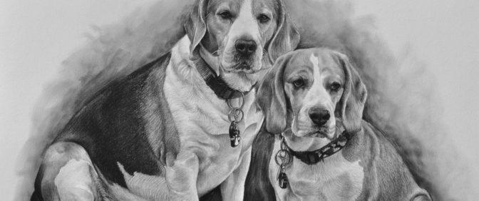 kresba psi bígl