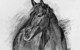 Kresba koně na přání